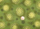 Sea Anemone from Red Rooster Bubbles Cotton Fabric Green 1 Yard