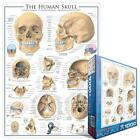 EuroGraphics 6000-0306 Human Skull 1000-Piece Puzzle