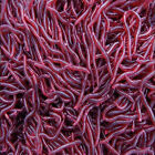 50 Pcs Soft Red Earthworm Fishing Bait Worm Lures Crankbaits Hooks Tackle Baits