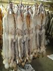 Tanned Coyote Hide #1 Grade/Furs/Trapping/Taxidermy/Crafts/Traps
