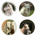Goat Magnets B 4 Cool Goats for your Fridge or Collection A Great Gift