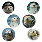 Sea Otter Magnets 6 Happy Sea Otters for your Fridge or Collection