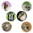 Squirrel Magnets6 Sassy Squirrels 4 your Fridge or Collection