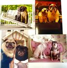 ANNIVERSARY CARD Dog Themed AVANTI Bulldogs Pugs Opposites FUN  FUNNY