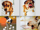 GET WELL CARD Avanti FOR THE DOG DOG THEMED Puppy French Bulldog +