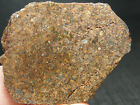 METEORITE SLICE or END CUT TOP QUALITY SLD 2337 1697g GREAT SPECIMEN