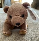 TY Beanie Baby PECAN the Bear 1999 MWMT