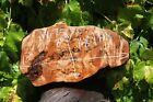 W 75 Maple Burl Slab Curly Live Edge Cutting Board Guestbook Taxidermy Sign