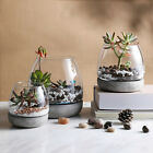 Set of 3 Glass Decor Candle Succulent Plants Holder with Concrete Cement Based