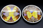 2 Vintage Taxidermy Real Butterfly Wing Art Wall Plates Geometric Abstract