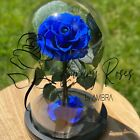 Glass dome real preserved rose eternal box rose immortal flower gift present