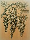 PSX Rubber Stamp Wisteria Botanical Flowers Plant Nature Card Making Large K648