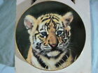 TIGER CUB Collector Plate CUBS OF THE BIG CATS COLLECTION ★FREE SHIPPING★