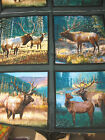 Mountain Sky Pillow Panel fabric 4 panels wild wings Elk mountains river B