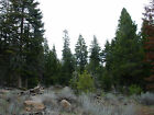 103 PER MONTH TO OWN AN ACRE OF NORTHERN CALIFORNIA LAND FOR SALE CAMP OR HUNT