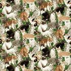 Whiskers Northcott Fabric Quilt Cats 10 remnant 1A