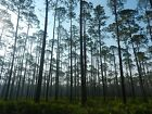 615 AC Land by Pond in PENSACOLA Development Project Florida Pre Foreclosure