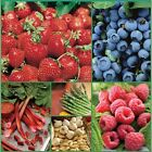 Berries Vegetable Garden Collection 60 Bulbs Bare Roots Asparagus Free Ship