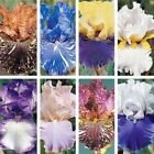 LOT 20 FRESH SPROUTED MIXED BEARDED IRIS RHIZOME BULBS