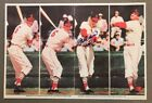 St. Louis Cardinals Collecting and Fan Guide 79