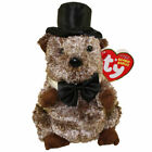 TY Beanie Baby - PUNXSUTAWNEY PHIL 2008 the Groundhog (6.5 inch) - MWMTs
