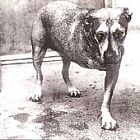 Alice In Chains – Alice In Chains (Album) [Audio CD] Disc & Pamphlet ONLY