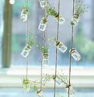 Hanging Glass Planter 30 Pack Air Plant Wall Holder Hanging Glass Terrarium C
