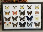 20 REAL MOUNTED BUTTERFLIES IN FRAME UNDER GLASS TAXIDERMY INSECTS