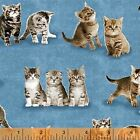 Windham Fabrics Unleashed by Whistler Studios 35557 2 Blue Kittens Cotton Fabric