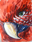 Red Parrot Bird Beak Home Pet Feathers Collectible ACEO Art Card