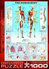 EUROGRAPHICS JIGSAW PUZZLE THE HUMAN BODY 1000 PCS MEDICAL CHART #6000-1000