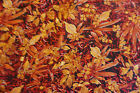 Inspirational Foliage Cotton Quilt Fabric Fall Leaves Red Rooster BFab