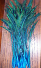10 Peacock Sword Feathers 30-35 Stem Dyed 11 Colors Available