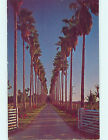 Pre 1980 PALM TREE LINED TROPICAL DRIVE Mcallen Texas TX hs3423