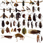 100 Dead BUGS Entomology Class School Insect Bug Collection IDENTIFIED US Native