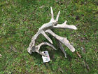 TAXIDERMY Huge 14 PtWHITETAIL DEER SHED ANTLER DROPS CABIN LODGE DECOR  47 24