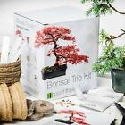 Bonsai Tree Starter Kit Grow 3 Trees RED MAPLE SILVER BIRCH MOUNTAIN PINE Grow