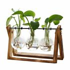 Plant Terrarium with Wooden Stand Air Planter Bulb Glass Vase Plant Terrarium