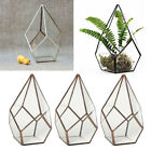 3x Irregular Bonsai Glass Geometric Terrarium Box Succulent Flower Pot Fern Moss