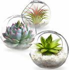 Tabletop Plant Containers Mini Glass  Ideal Spherical Vases 3pcs