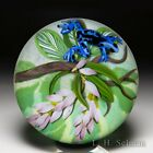 Cathy Richardson 2021 Blue Tropical Frog and pink flowers glass paperweight