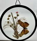 Vintage Butterfly Taxidermy and Dried Flowers in Round Convex Glass Metal Frame