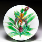 Saint Louis 1990 Ophrys orchid glass paperweight