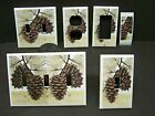 PINE CONES PINE CONE 20 LIGHT SWITCH COVER PLATE OR OUTLET COVER