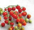 ORGANIC RED CURRANT TOMATO 10 SEEDS (TINY)