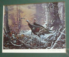 $195 OR BEST!! TED BLAYLOCK, LISTED PRINT, PENCIL SIGNED, TURKEY BIRDS IN FOREST