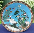 Elaborate Antique Japanese 19thC Meiji Cloisonne Charger - Birds Amongst Flowers