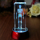 3D Laser Etched Crystal Scary Bones Paperweight Home Decor Collectibles Gift