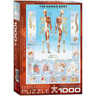 New The Human Body Jigsaw Puzzle - 1000-Piece Model:7976545