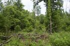 1455 ACRES OF WOODED MISSOURI LAND IN SHANNON COUNTY 31733 Mo